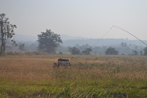 sapik_thai_agriculture